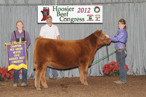 Champion Red Angus Heifer