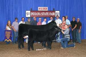 Champion Cow Calf Pair at 2014 National Junior Heifer Show