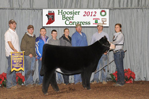 Res Champion Chi Heifer 2012 Hoosier Beef Congress