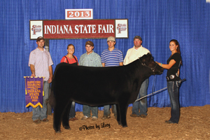 Cricket Summer Yearling Champion 2013 Indiana State Fair Open Chi Show