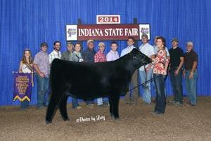 Grand Champion Chi 2014 Indiana State Fair open chi show