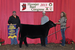 Reserve Grand Sale Heifer 2013 Hoosier Beef Congress