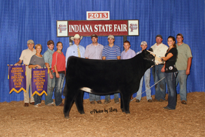 Res Champion Chinaina Heifer 2013 Indiana State Fair Open Show